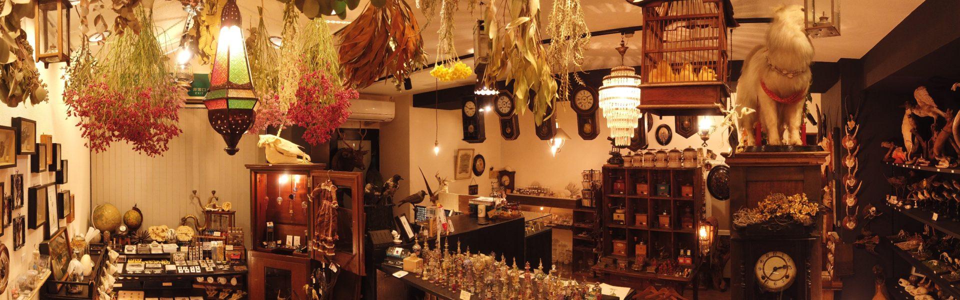 博物と古物の奇妙な雑貨店 シュレディンガーの猫|金沢の奇妙な雑貨屋さん